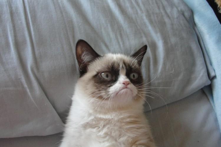taratata flop davy croket grumpy cat